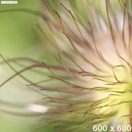 dummy-600x600-Floral